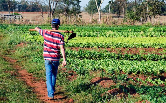 Homem é visto de costas caminhando ao longo de plantação com enxada apoiada no ombro