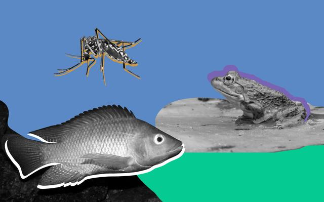 sobre fundo azul e verde, recortes em preto e branco de um mosquito, um peixe, e um sapo.