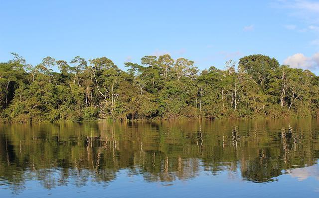 árvores à margem de rio