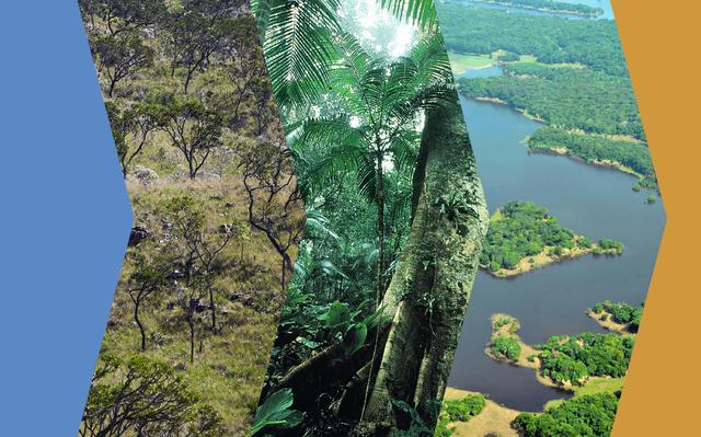 montagem com 3 fotos de paisagens naturais