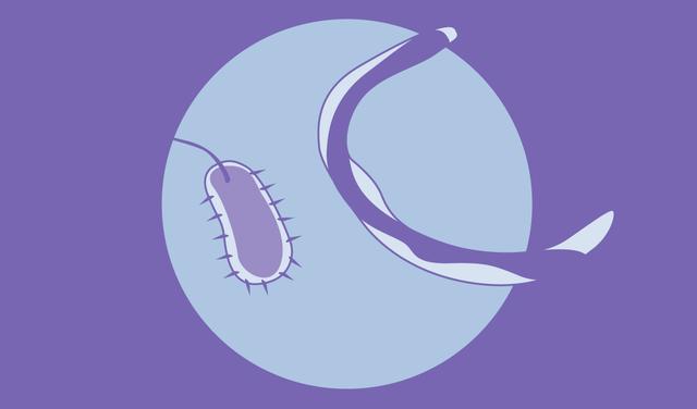 Ilustrações em tons e roxo de uma bactéria e um protozoário