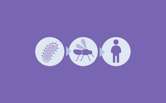 Ilustração com o pictograma de protozoário, um mosquito e um ser humano sobre fundo roxo