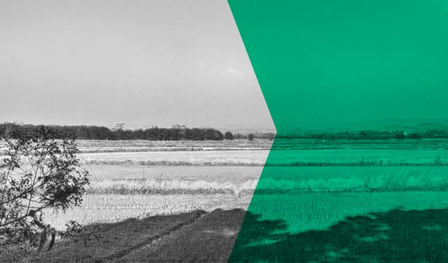 Montagem de foto em preto-e-branco de paisagem de plantação. Sobre metade da foto há um filtro verde.