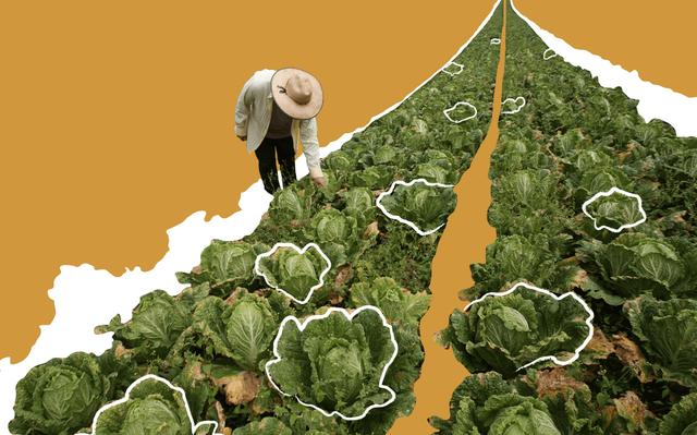 agricultura e desenvolvimento economico