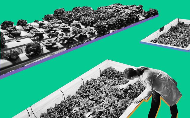Imagem em recortes com mulher analisando plantas e fundo verde