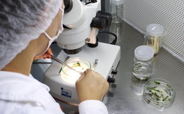 De costas, uma pessoa, usando jaleco branco, manuseia o pedaço de uma planta em um aparelho semelhante a um microscópio, debaixo de uma luz forte. Ela usa pinças de laboratório para manusear.