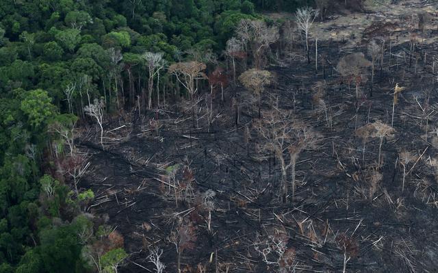 vista aérea de área desmatada da floresta amazônica
