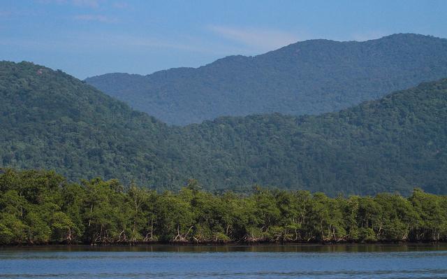 Manguezal (vegetação que fica entre a terra e a água) sobre um rio. Atrás dele há serras verdes, preenchidas com árvores.