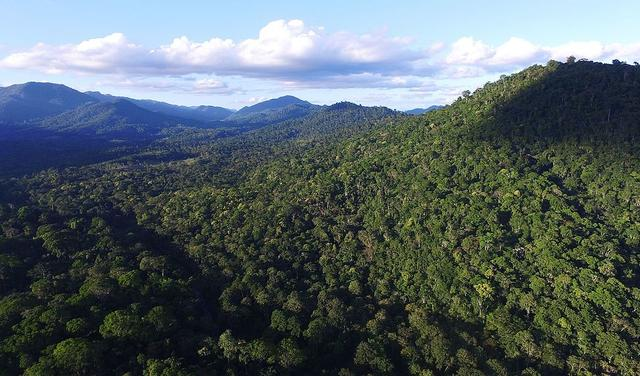 Morro coberto por árvores verdes típicas das florestas da Mata Atlântica. Ao fundo, aparece um céu azul com nuvens.
