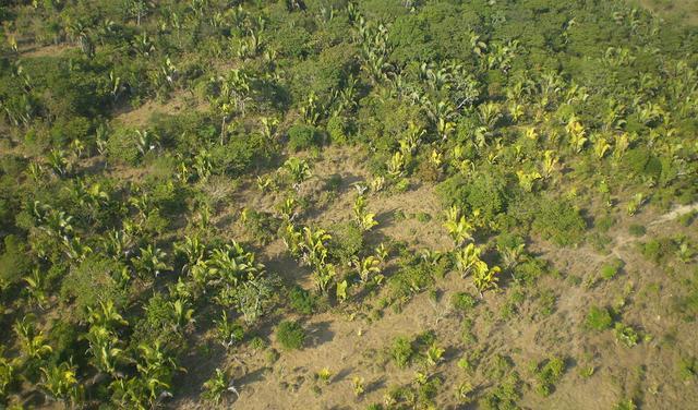 visão aérea de vegetação de transição