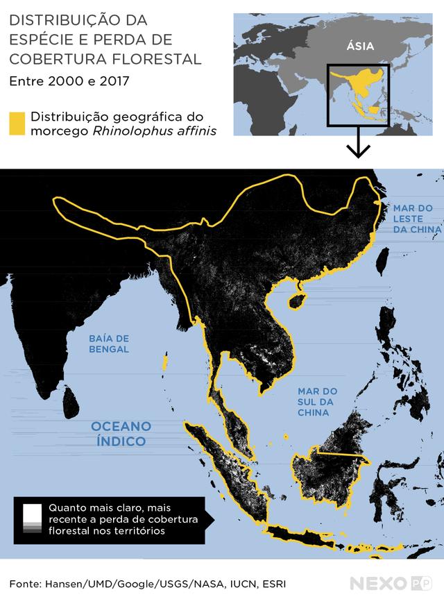 Imagem com dois mapas mostra, no mapa de cima, a ditribuição geográfica de Rhinolophus affinis no sudeste da Ásia e, no mapa de baixo, a perda de cobertura florestal entre 2000-2017 dentro da distribuição geográfica de Rhinolophus affinis.